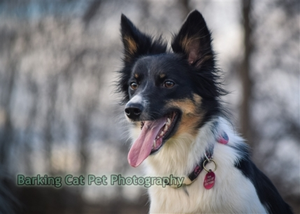 watermarked-Heidi, Swift and Rayna-0354