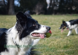 watermarked-Heidi, Swift and Rayna-0431