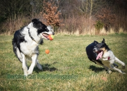 watermarked-Heidi, Swift and Rayna-0508