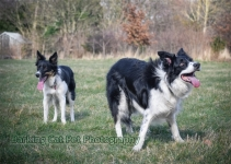 watermarked-Heidi, Swift and Rayna-0540