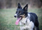 watermarked-Heidi, Swift and Rayna-0549