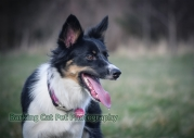 watermarked-Heidi, Swift and Rayna-0552