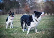 watermarked-Heidi, Swift and Rayna-0554