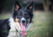 watermarked-Heidi, Swift and Rayna-0558