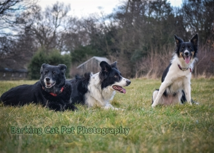 watermarked-Heidi, Swift and Rayna-0688