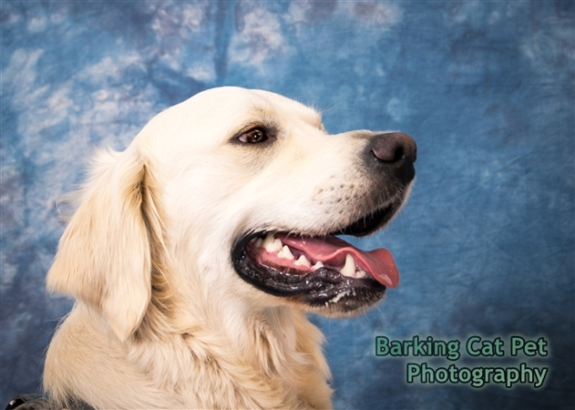watermarked-Milo Collie Benefit-0017