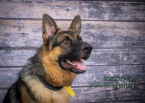 watermarked-Dogs Trust Fun Day 2018-0109