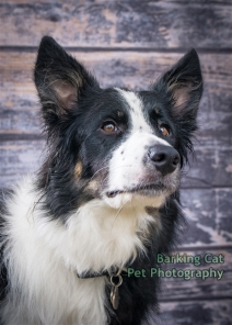 watermarked-Dogs Trust Fun Day 2018-0215
