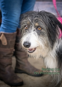 watermarked-Dogs Trust Fun Day 2018-0262