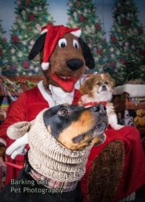 watermarked-Santa Paws-0167