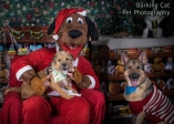 watermarked-Santa Paws-0230