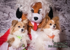 watermarked-Santa Paws Tranent-0111