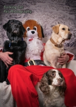 watermarked-Santa Paws Tranent-0122